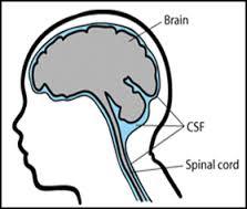 spinal fluid